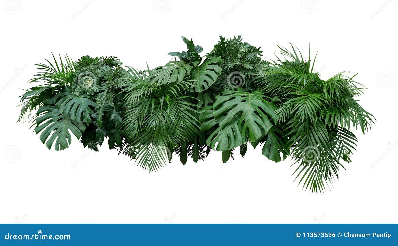Тропический bac природы цветочной композиции куста завода листвы листьев