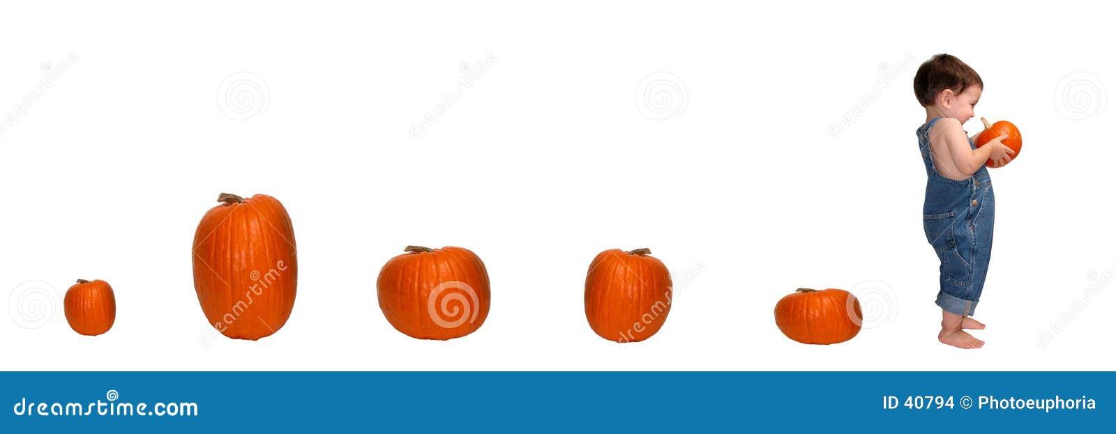 тропка тыквы