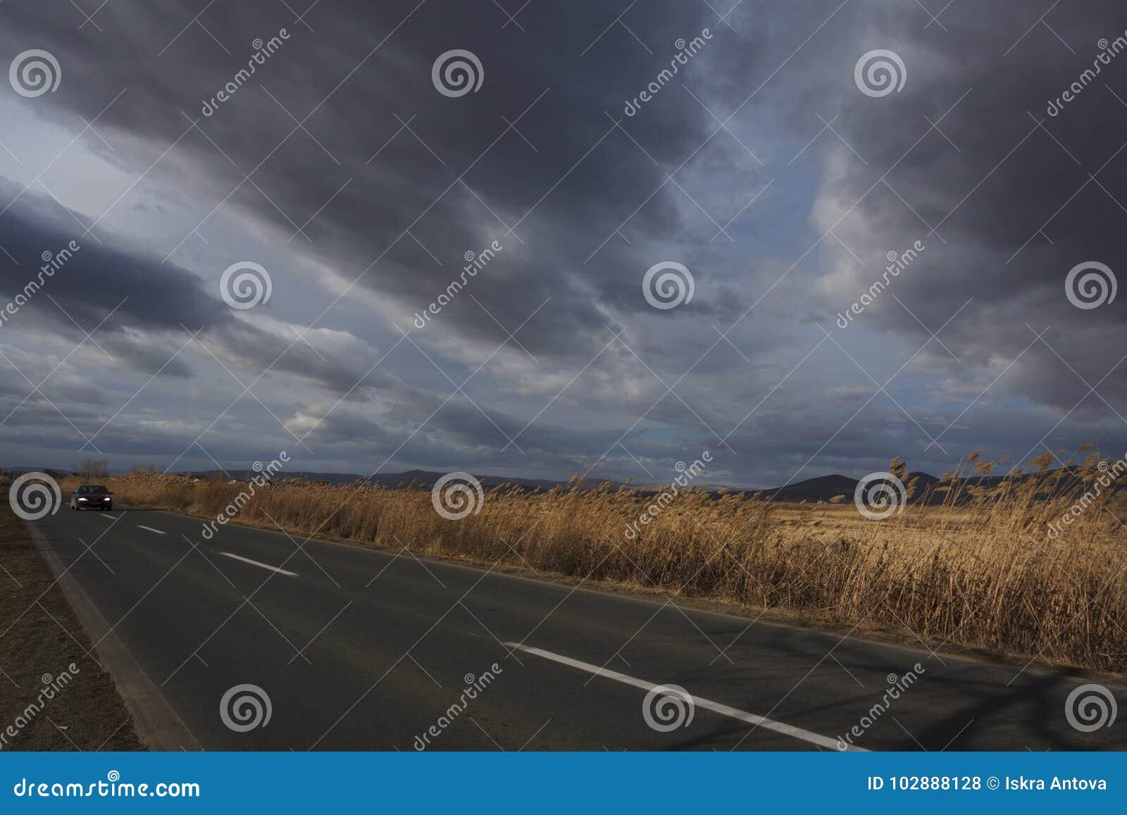 Тростники вдоль дороги под облачным небом Ландшафт осени