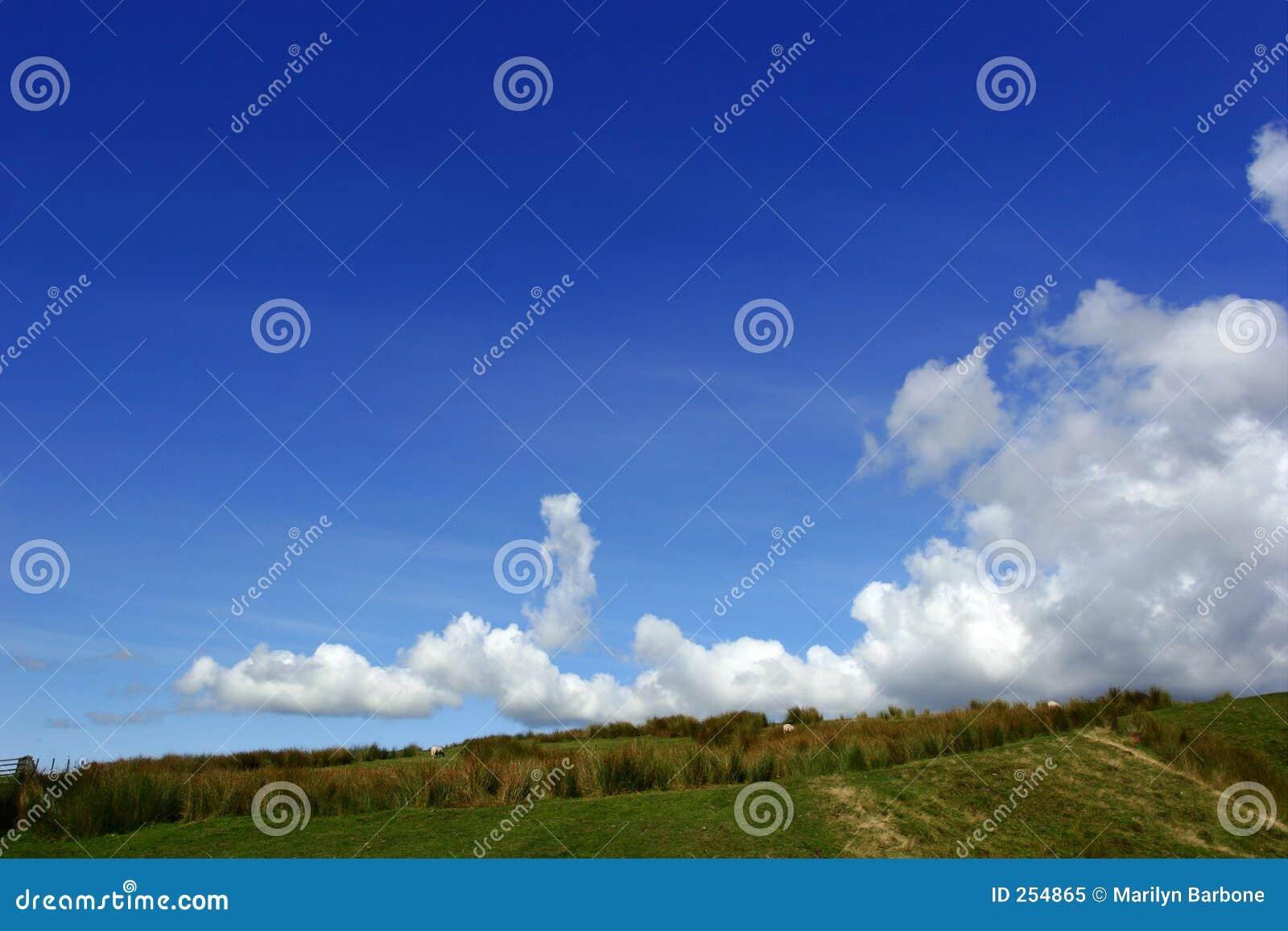 тростники горного склона