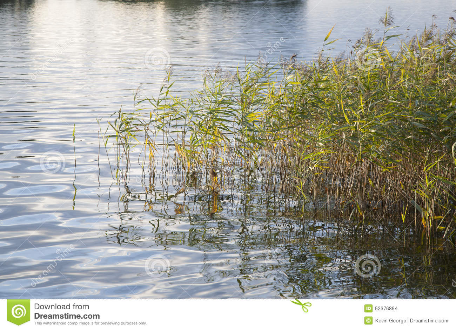 Тростники и длинная трава