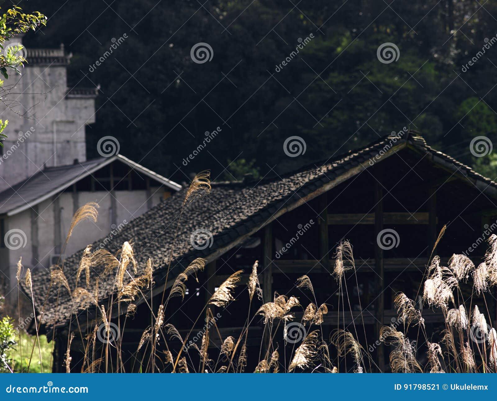 Тростники и дома