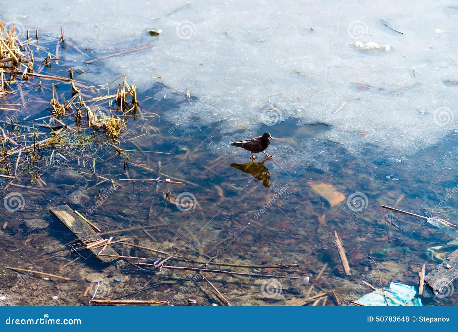 Тростники и отражение в неподвижной воде