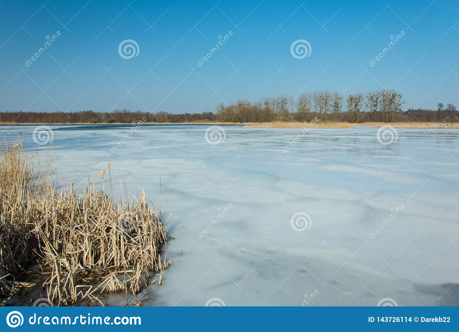 Тростники и снег на береге замороженного озера Деревья на горизонте и голубом небе