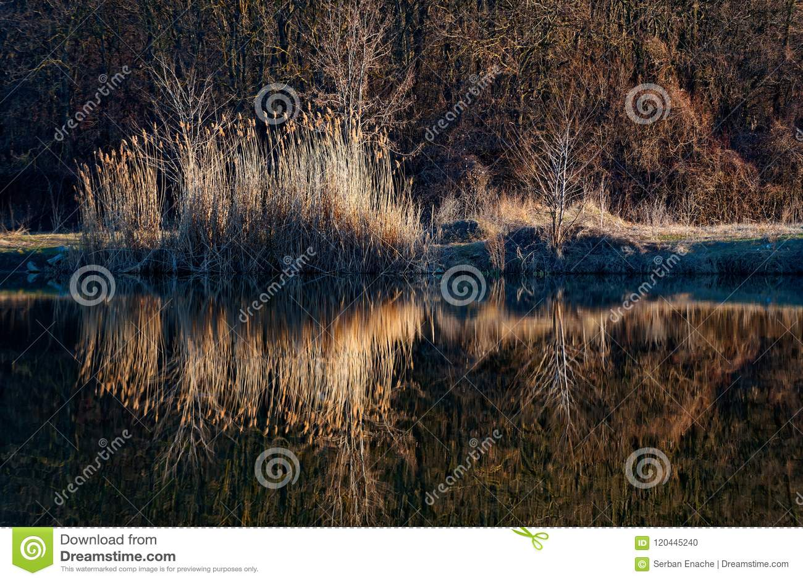 Тростники отраженные в озере