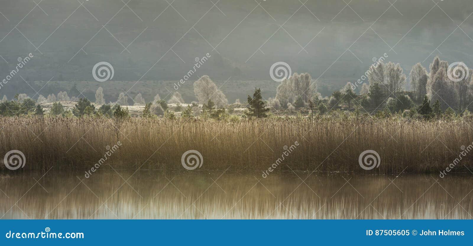 Тростники Mallachie озера & морозные деревья в Шотландии