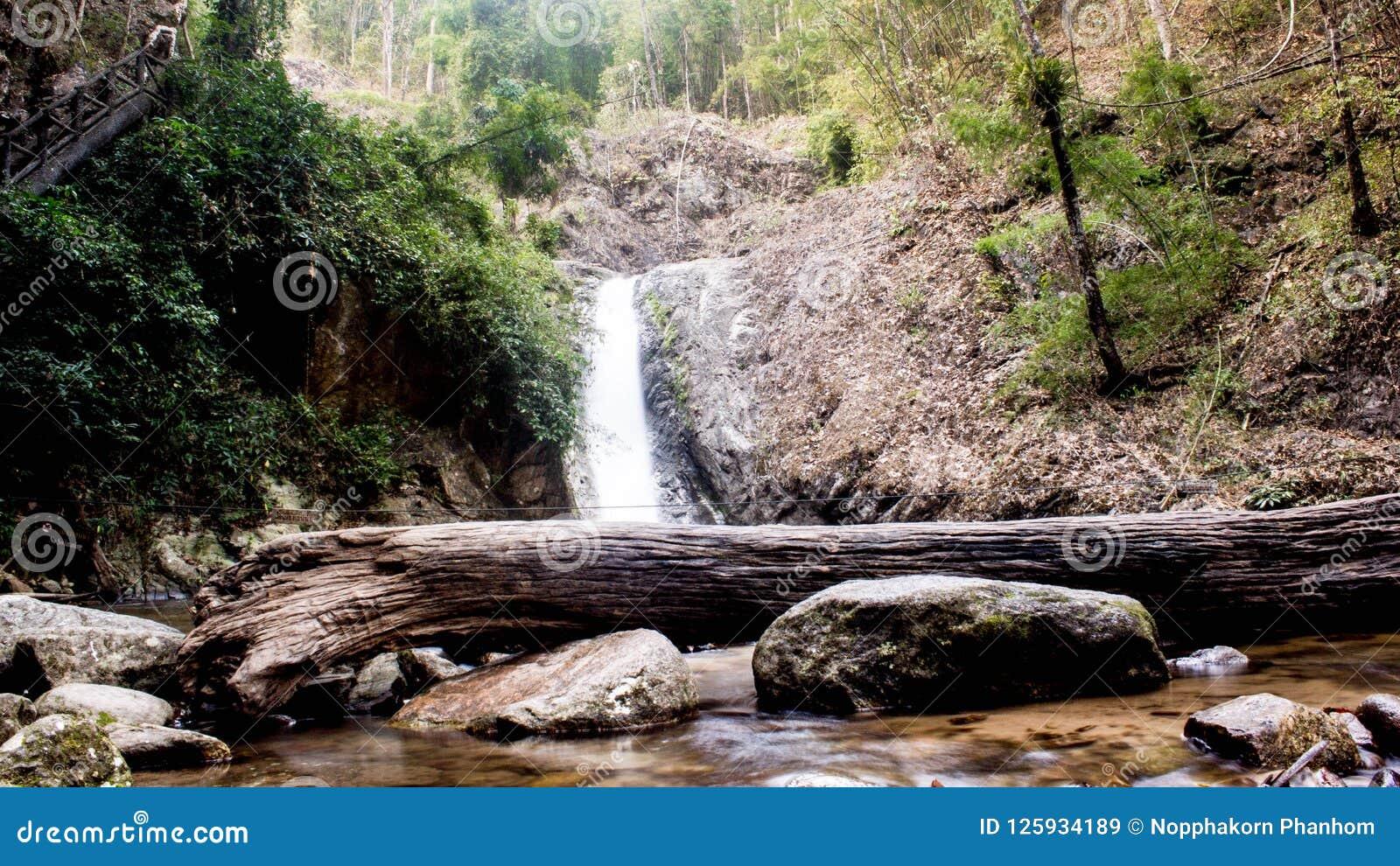 Тротуар обзора леса водопадов