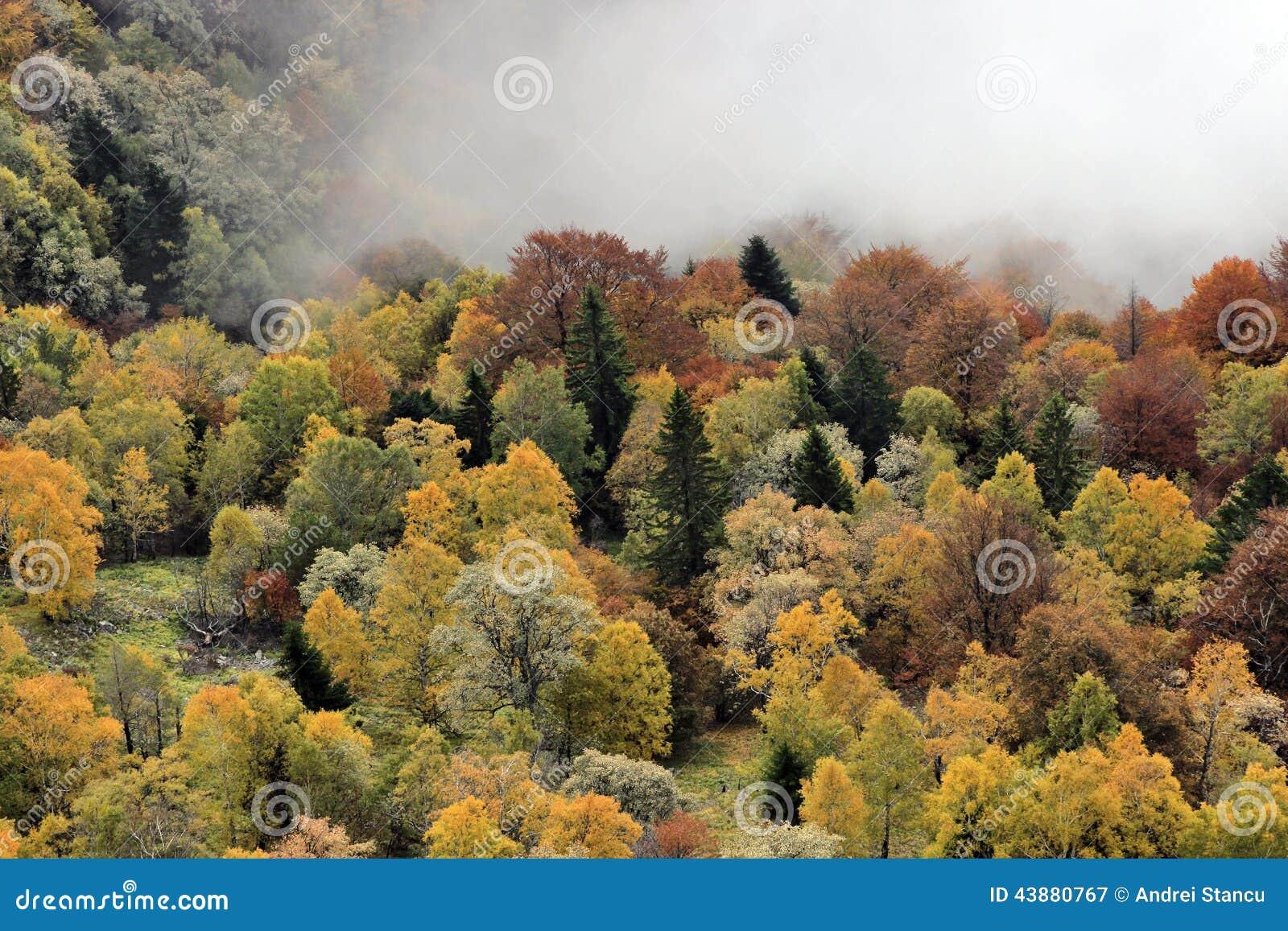 Туманная осень Forrest