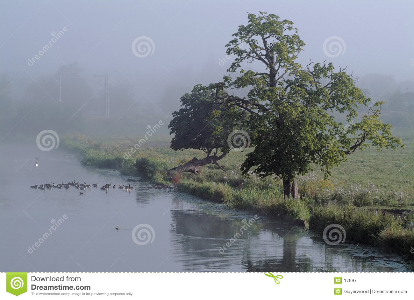 туманное берег реки утра