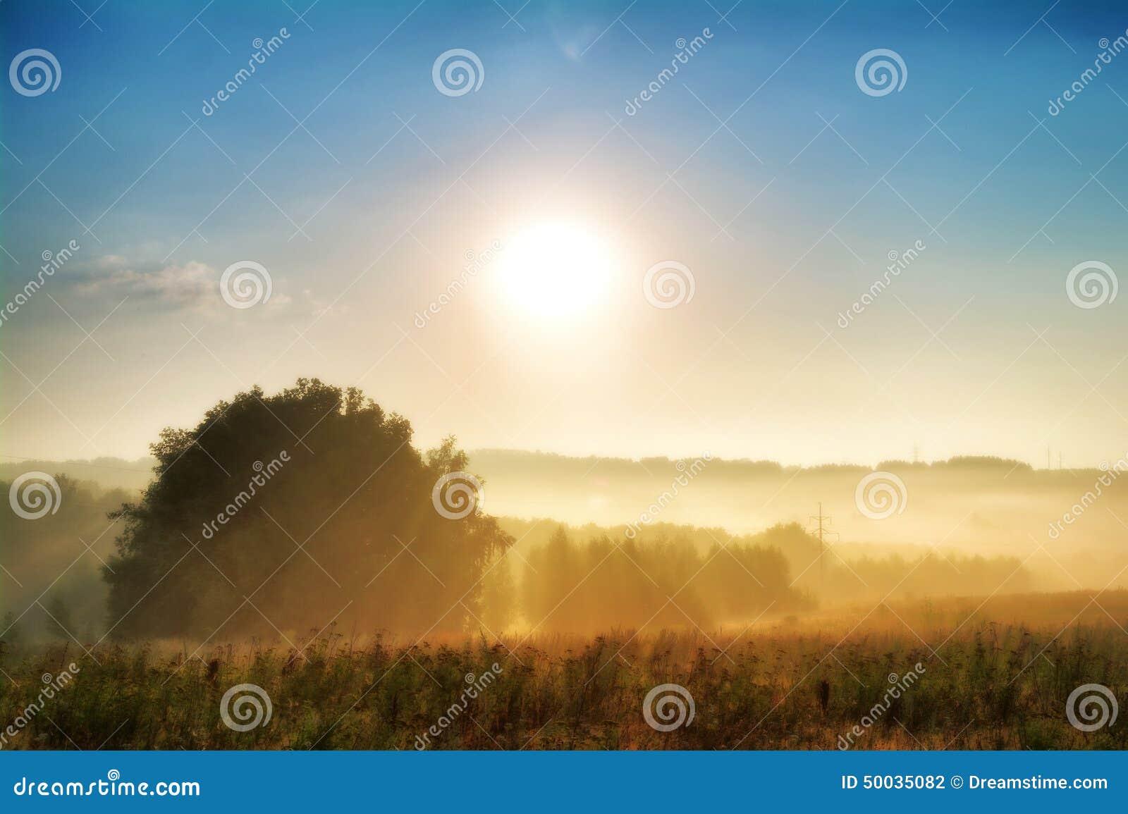 Туманное утро в русском поле