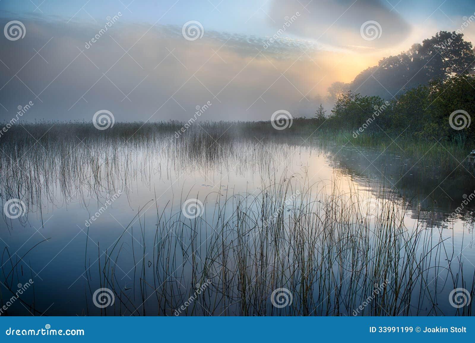 Туман утра на восходе солнца