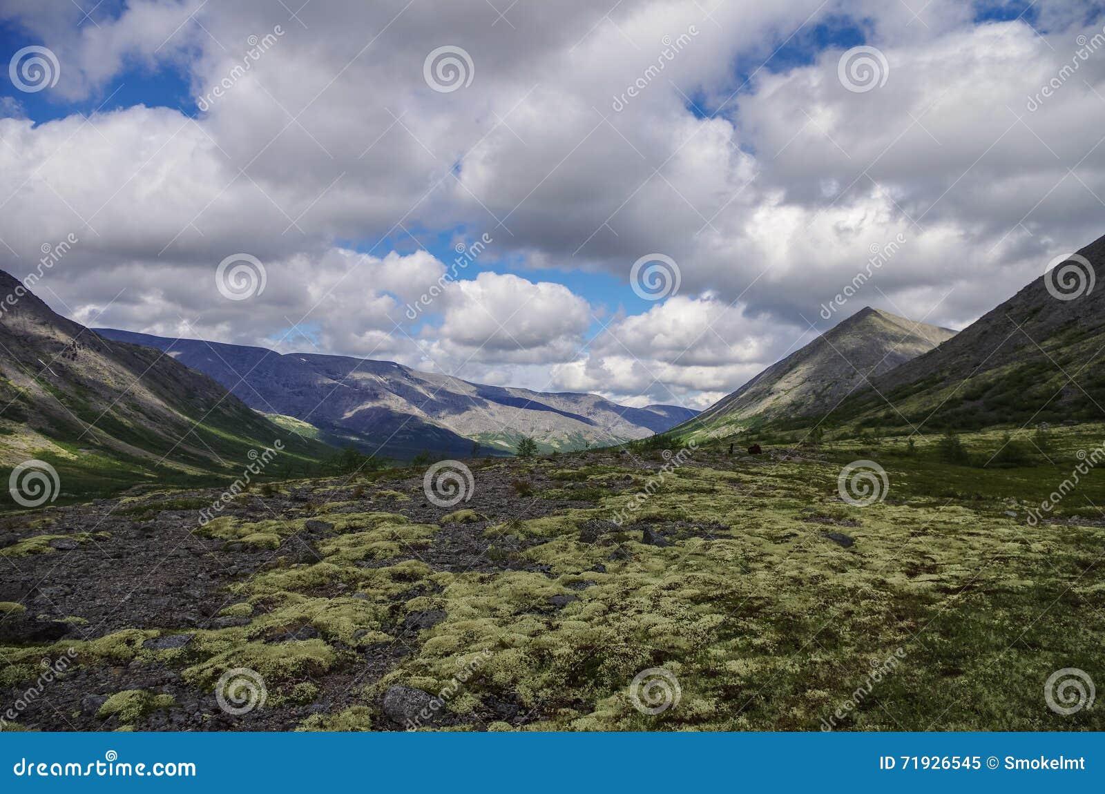 Тундра горы при мхи и утесы покрытые с лишайниками, Hibi
