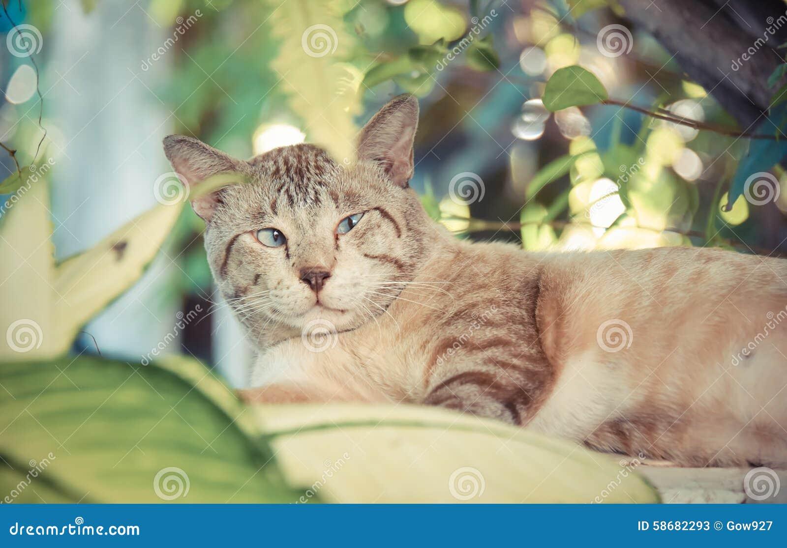 Тучный снежный кот показывает тревожность и предупреждает выражение в