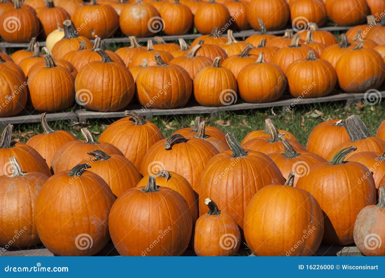 тыквы тыквы halloween еды фермы падения осени