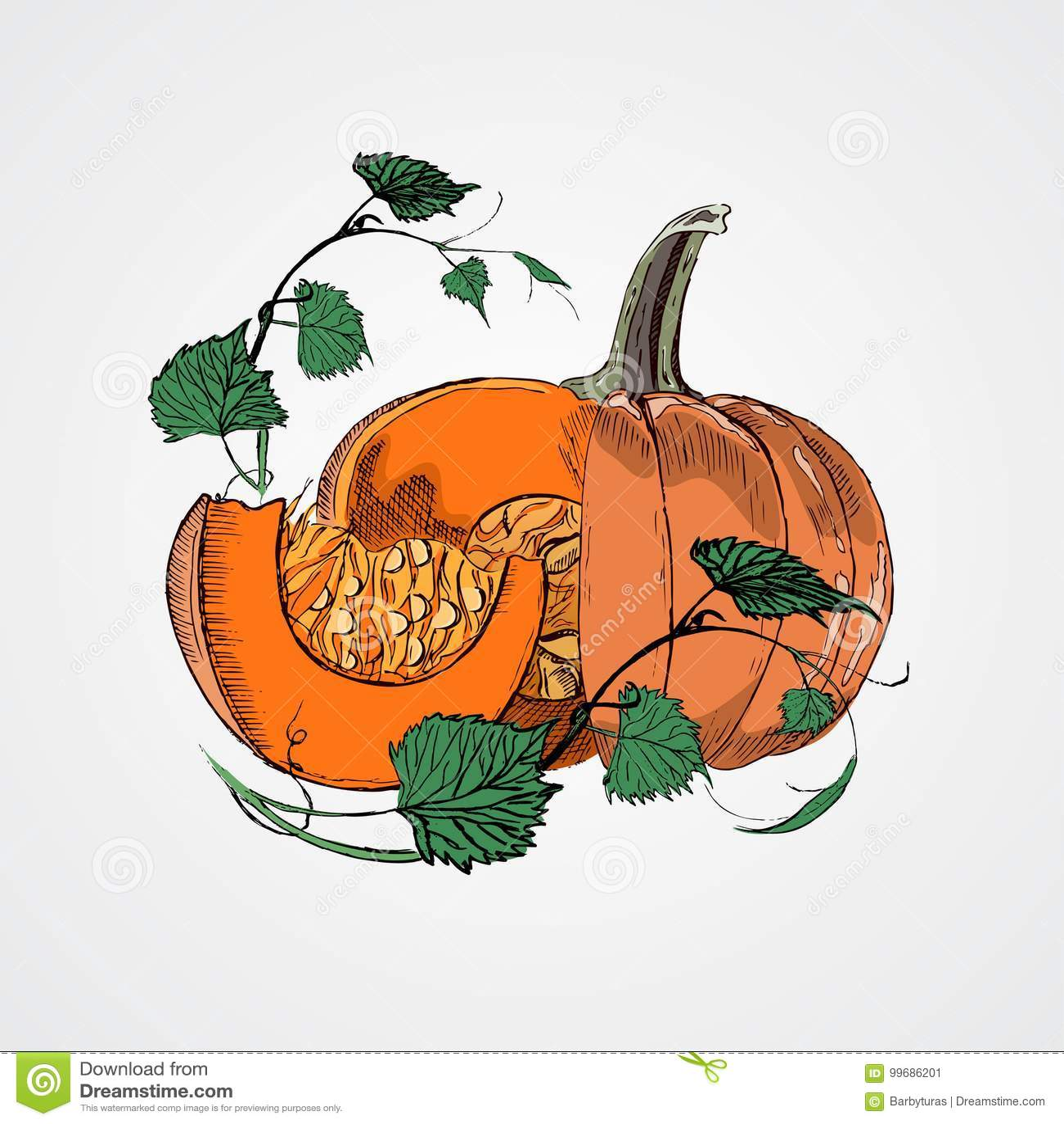 Тыквы Doodle Vector изображение краски нарисованное рукой в стиле шаржа