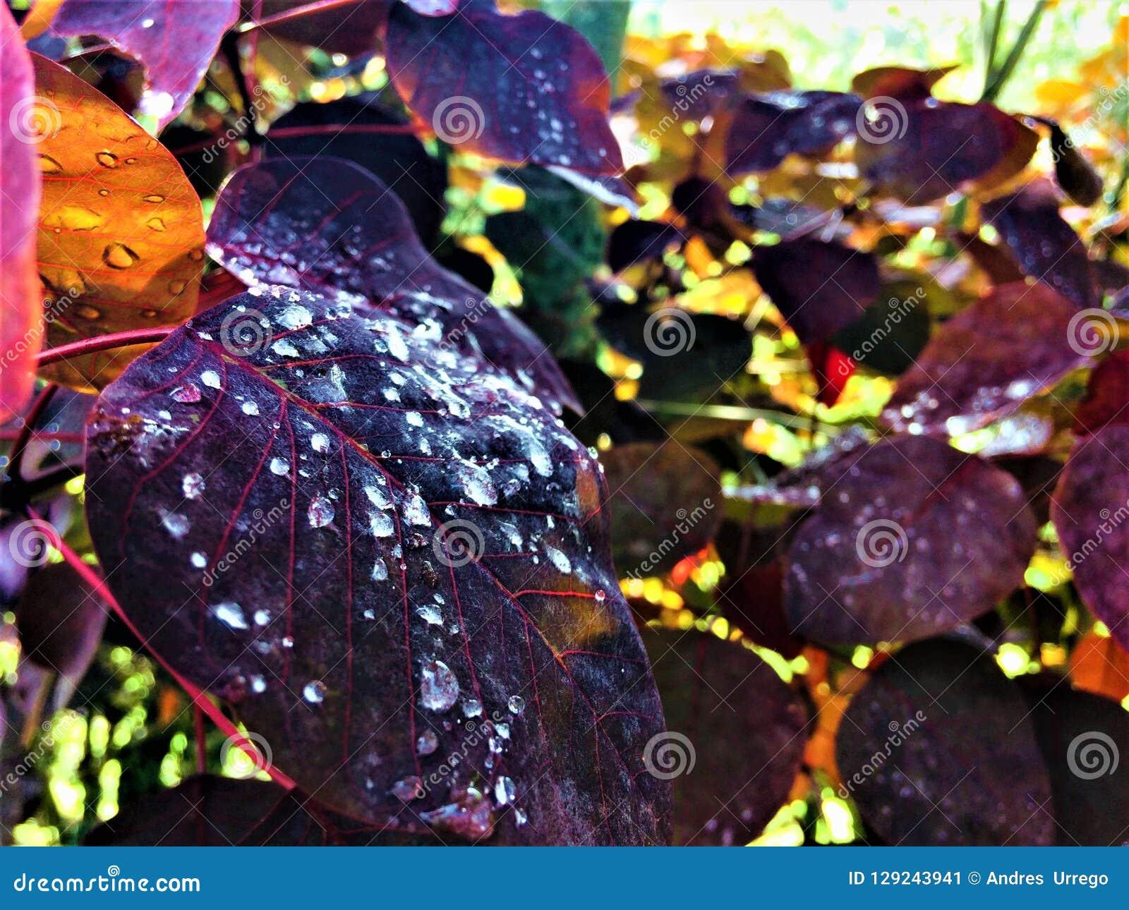 Увеличиванная природа в ярких цветах