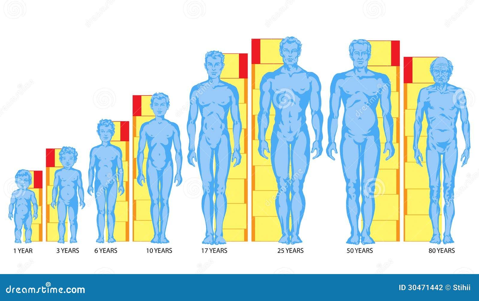 возраст разных частей тела суд обещания Евланова