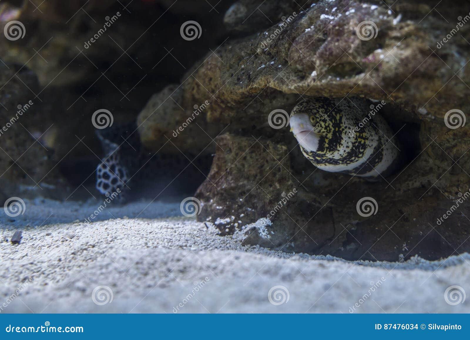 Угорь моря среди утесов под водой
