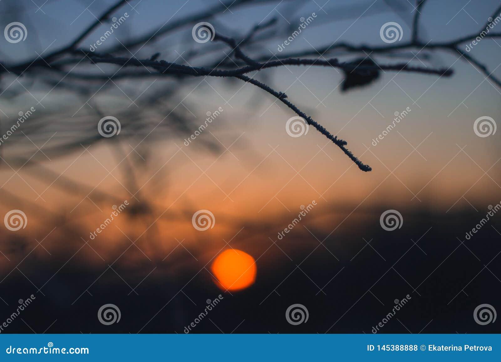 Уединенная ветвь на ярком оранжевом фоне заходящего солнца Ветвь без конца-вверх листьев Красивое bokeh захода солнца зимы