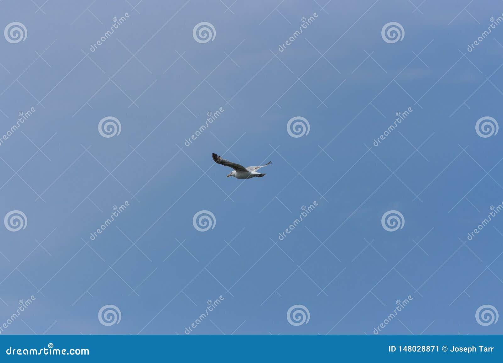 Уединенная чайка на ясном голубом небе
