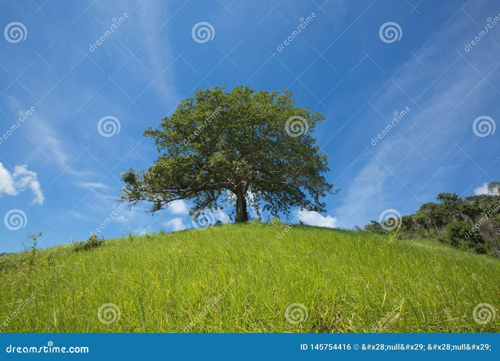 уединенное дерево
