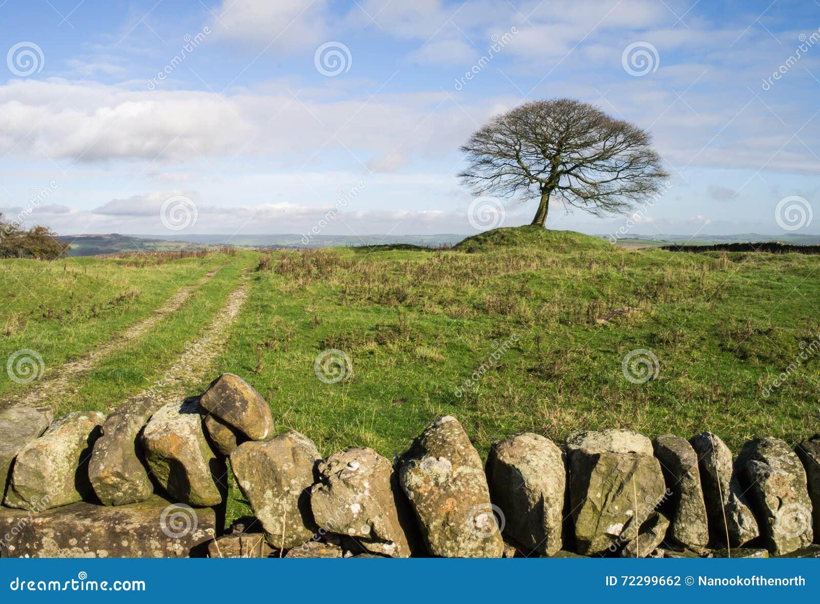 Download Уединённое дерево на Grindon причаливает, Дербишир Стоковое Фото - изображение насчитывающей мирно, лето: 72299662
