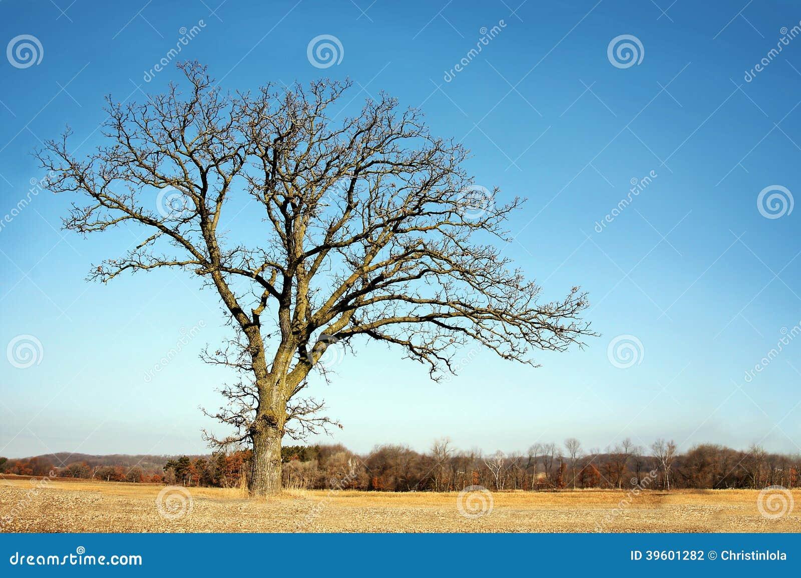 Уединённый оголите разветвленное дерево зимы в стране