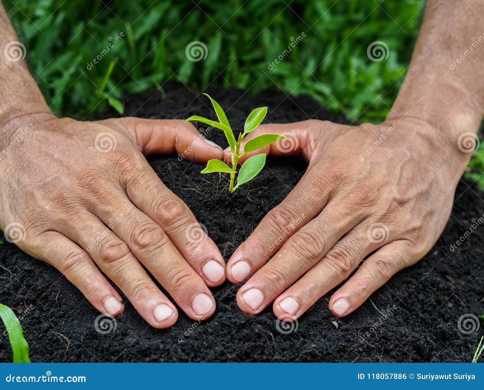 Укомплектуйте личным составом руки засаживая дерево в почву засаживать принципиальной схемы