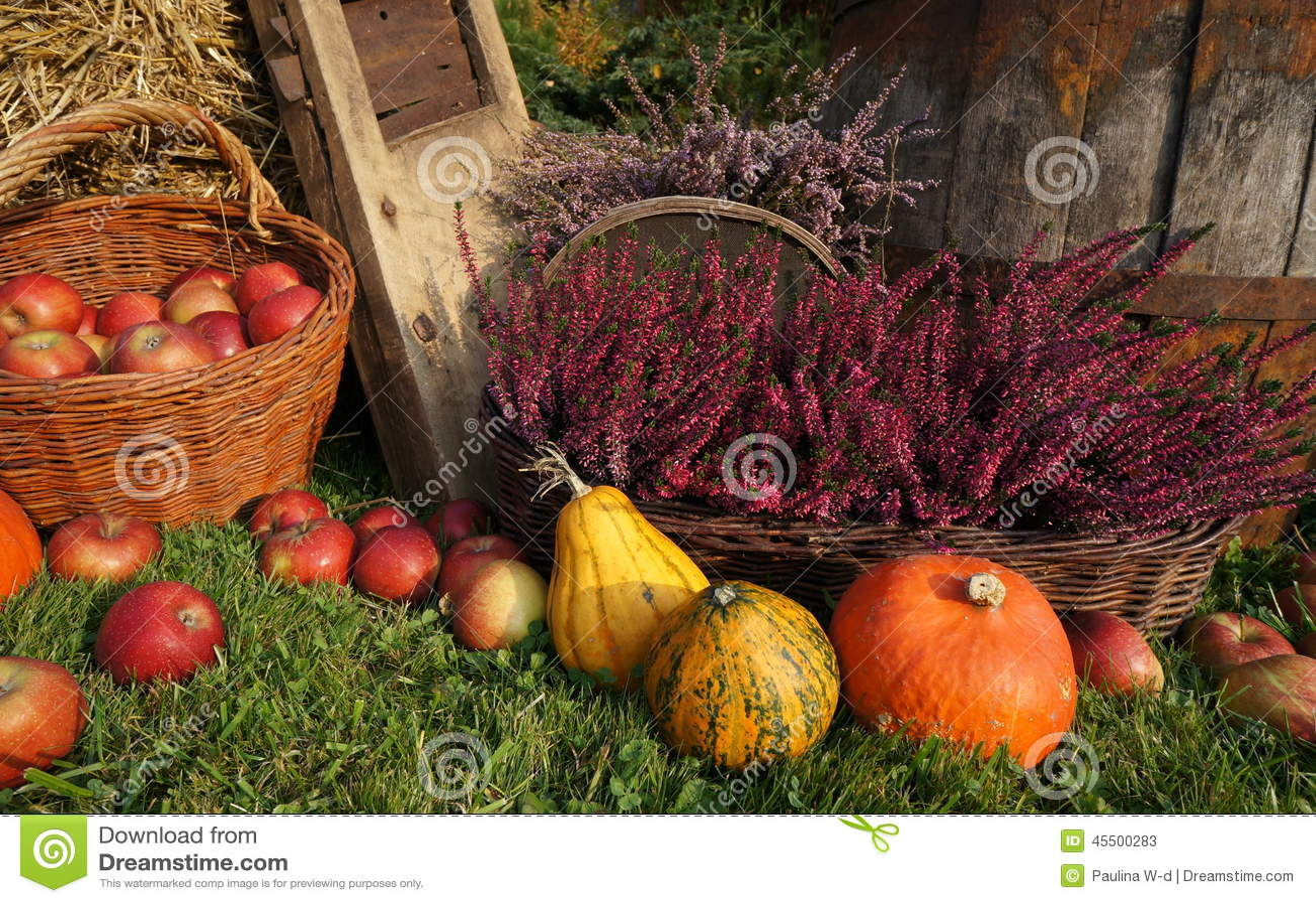 Украшение осени, тыквы, сквош, цветки вереска и плетеная корзина с яблоками