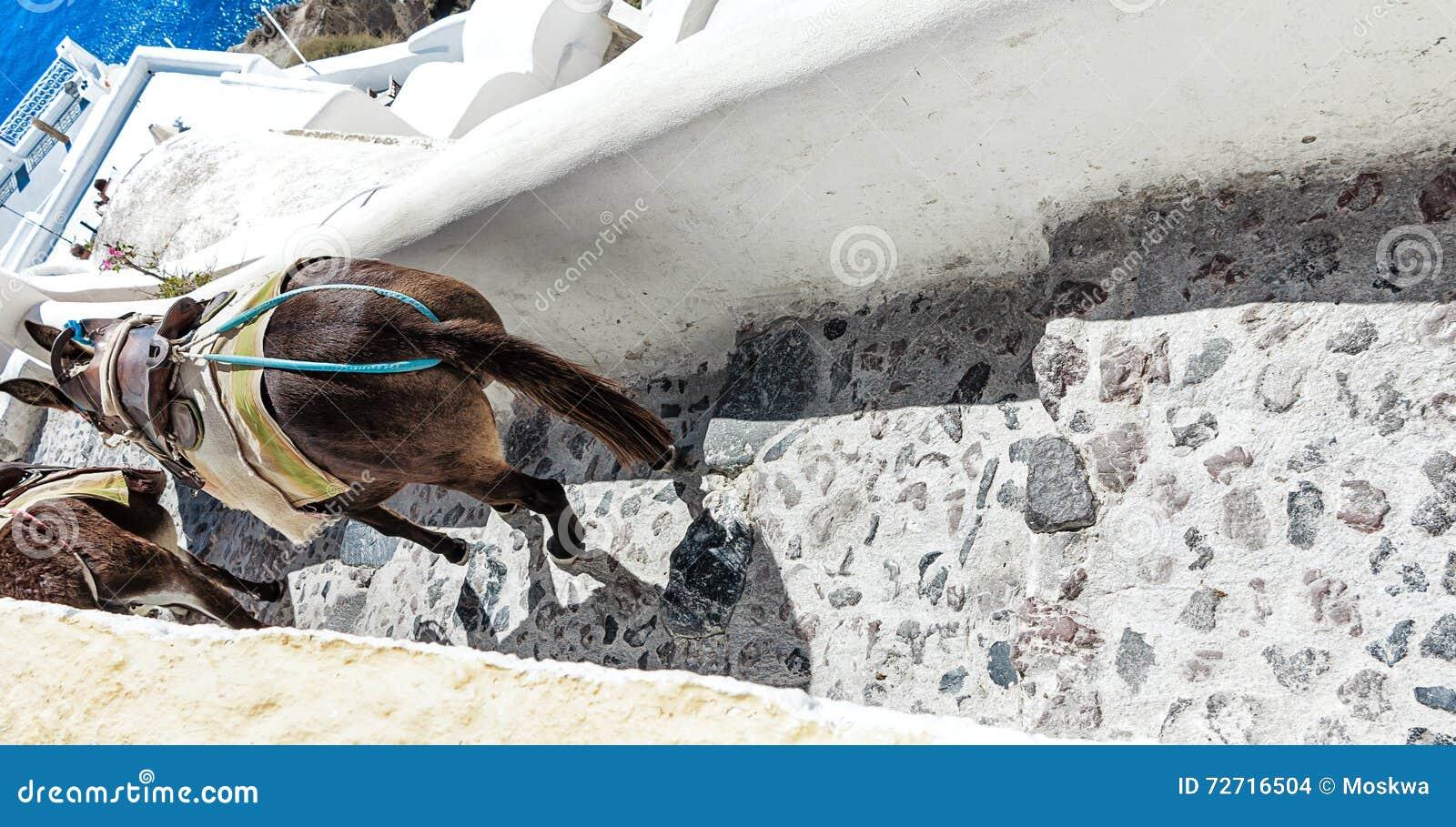 Украшенные ослы на крутой узкой улице Santorini (Oia), Греции