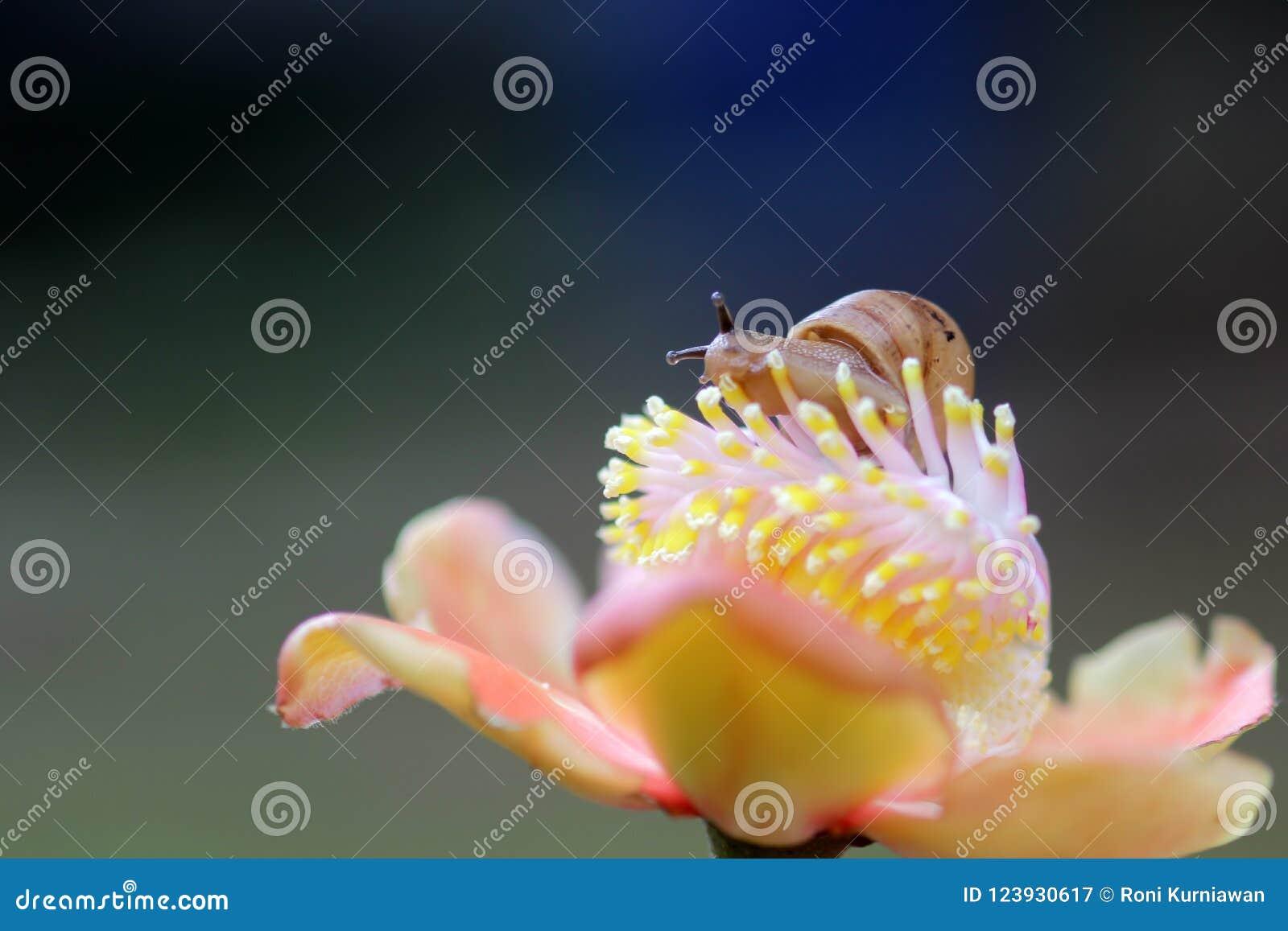 Улитки, прогулка улиток над цветками