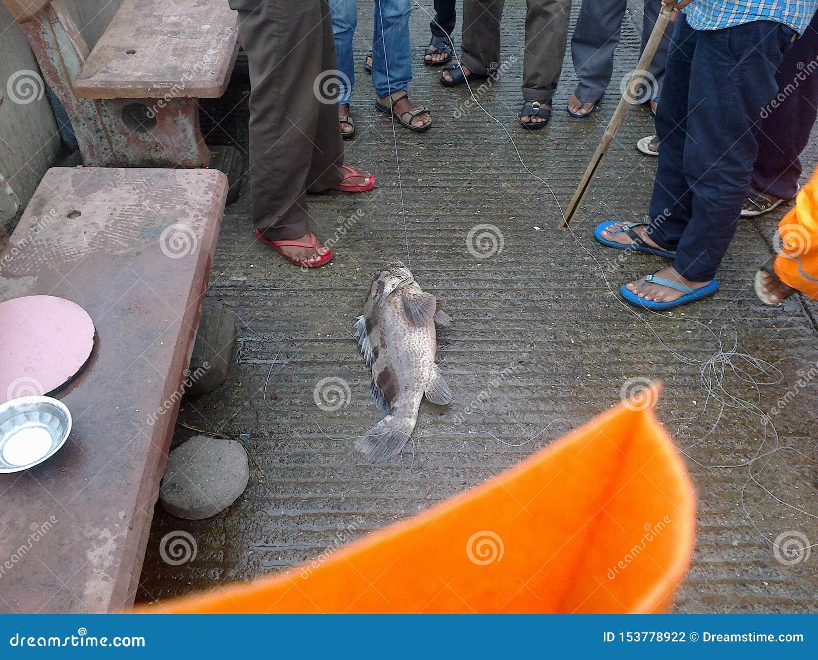 Уникальный путь уловить рыб