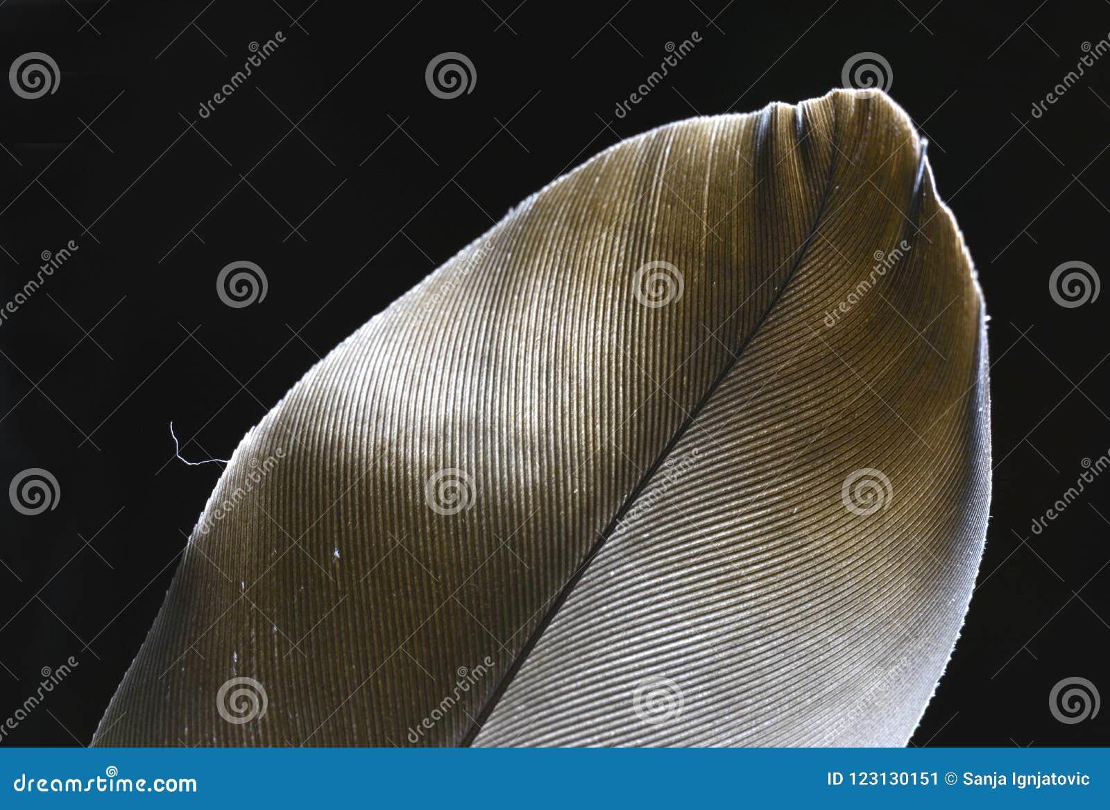 Унылый конец-вверх пера под мягкими светами