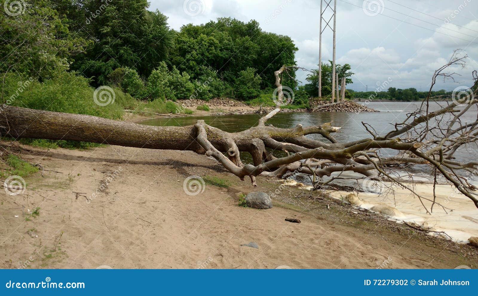 Download Упаденное дерево на пляже стоковое фото. изображение насчитывающей мертво - 72279302