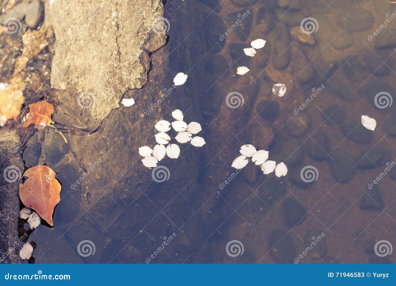 Упаденные лепестки в воде