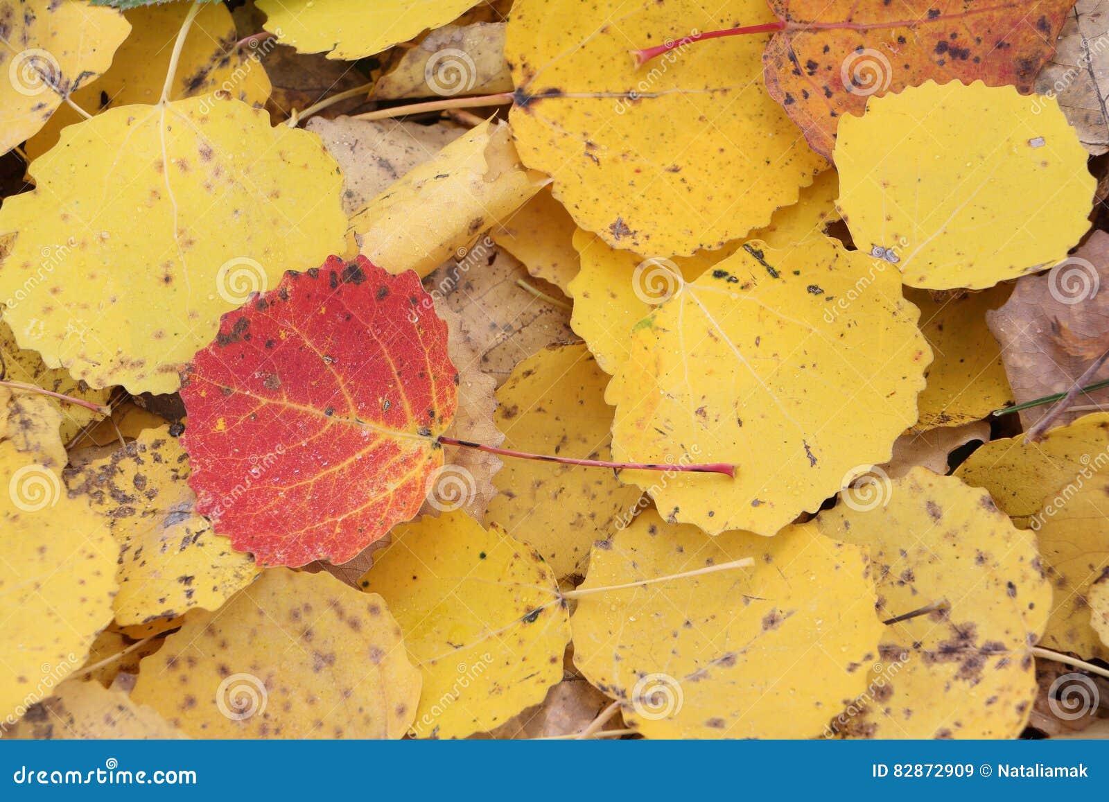 Разные листья картинки