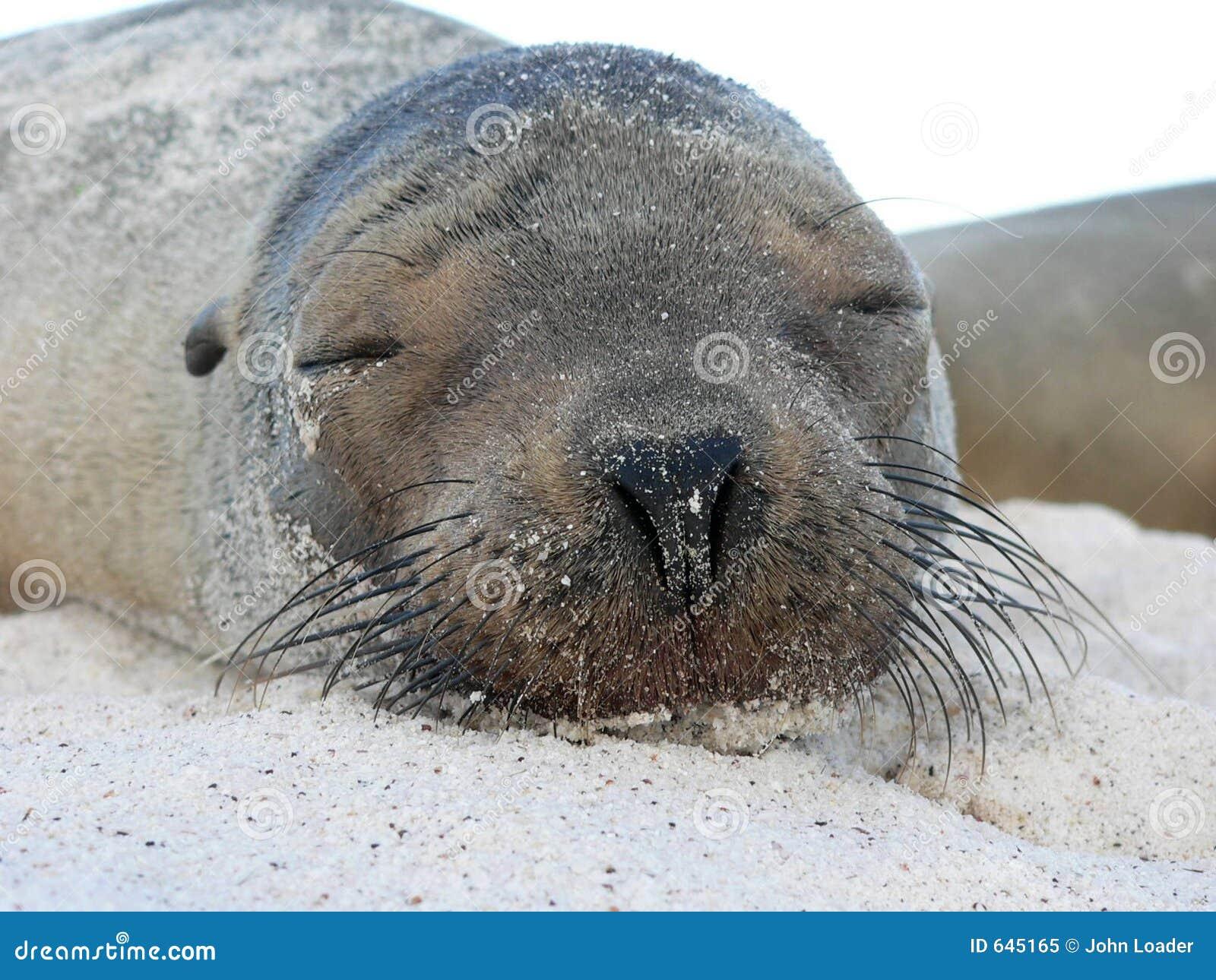 Download уплотнение щенка стоковое изображение. изображение насчитывающей песок - 645165
