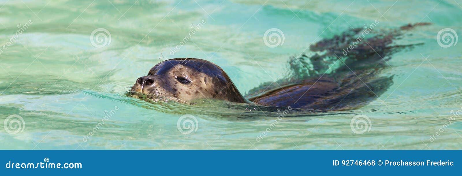 Уплотнения заплывания