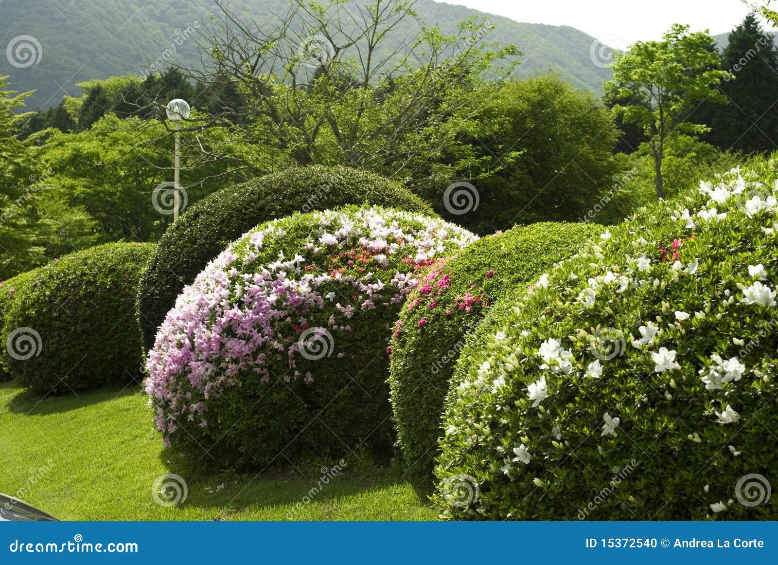 уравновешенный bush