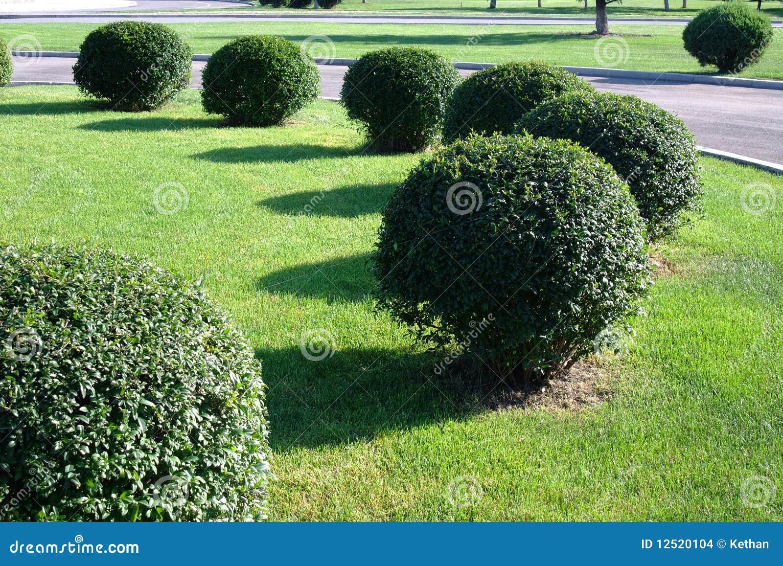 уравновешенный topiary bush