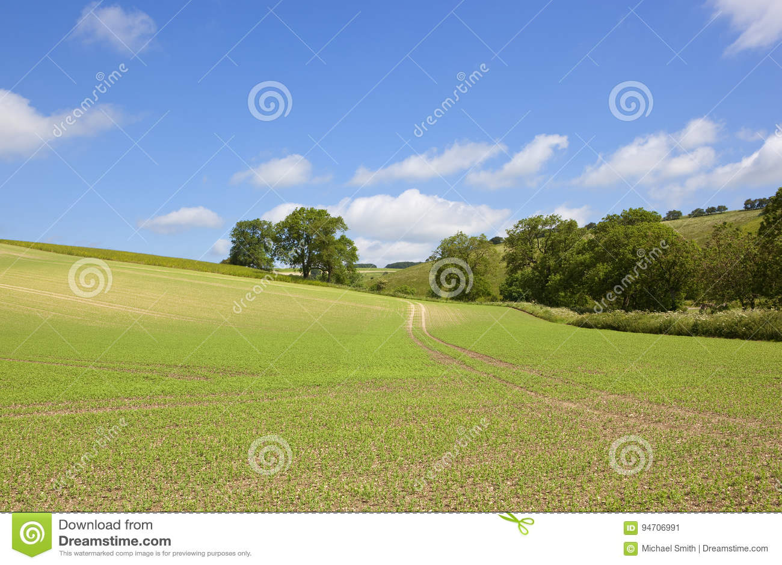 Урожай и деревья гороха
