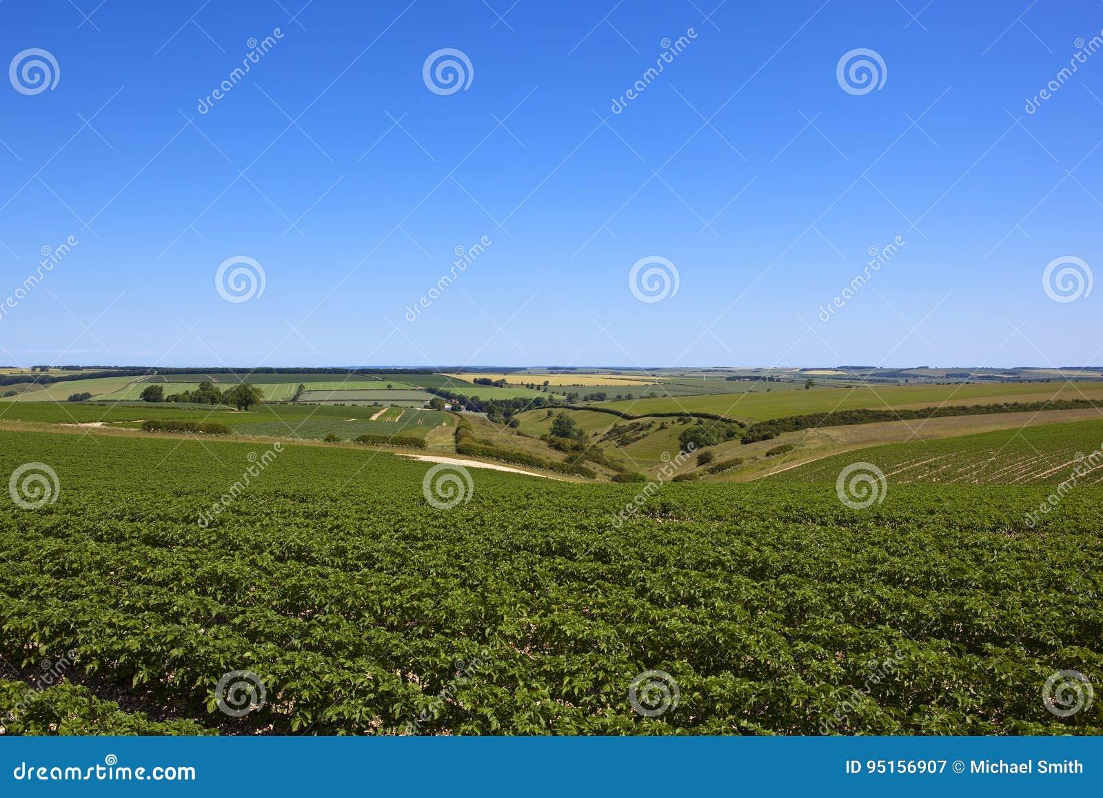 Урожай и долина картошки