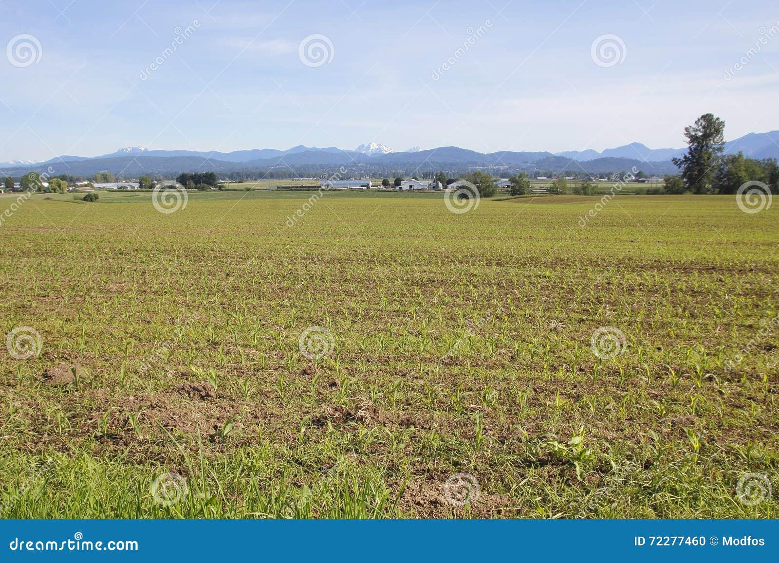 Download Урожай овоща долины Fraser стоковое фото. изображение насчитывающей coast - 72277460