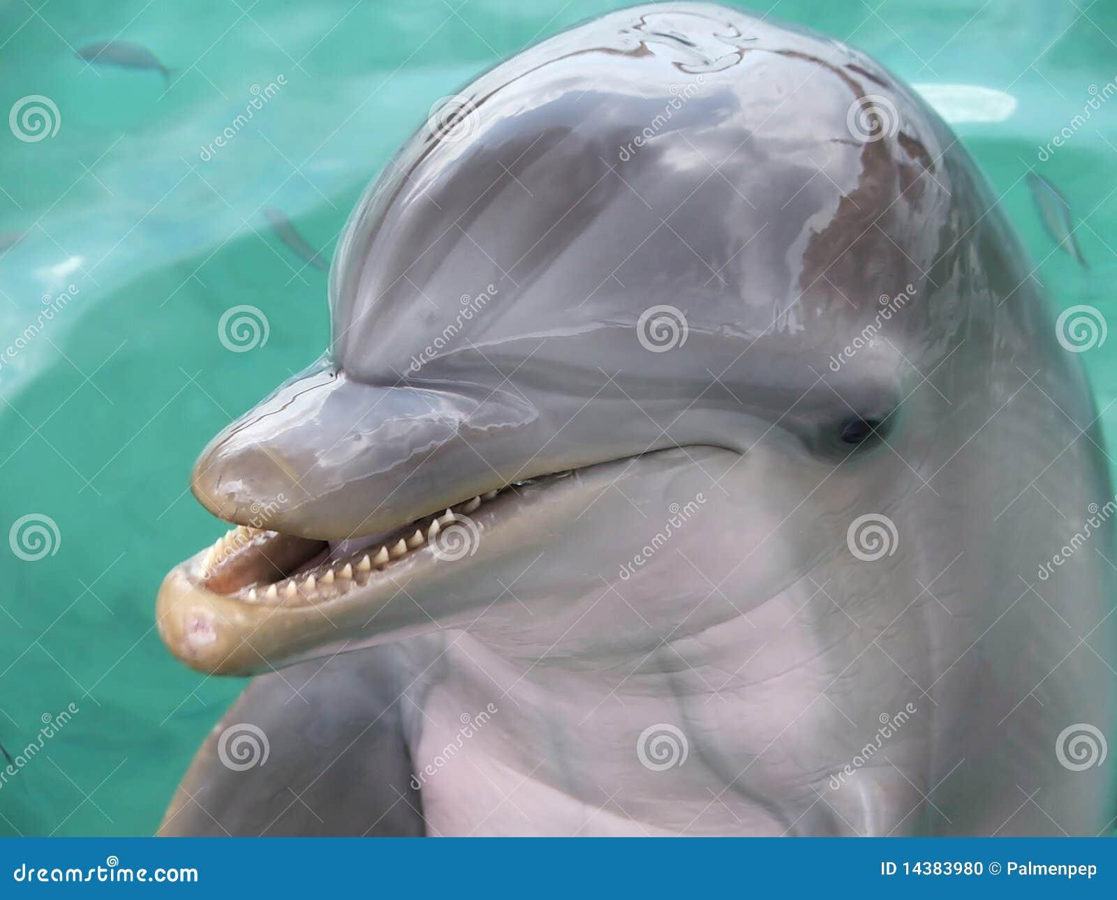 усмешка дельфина