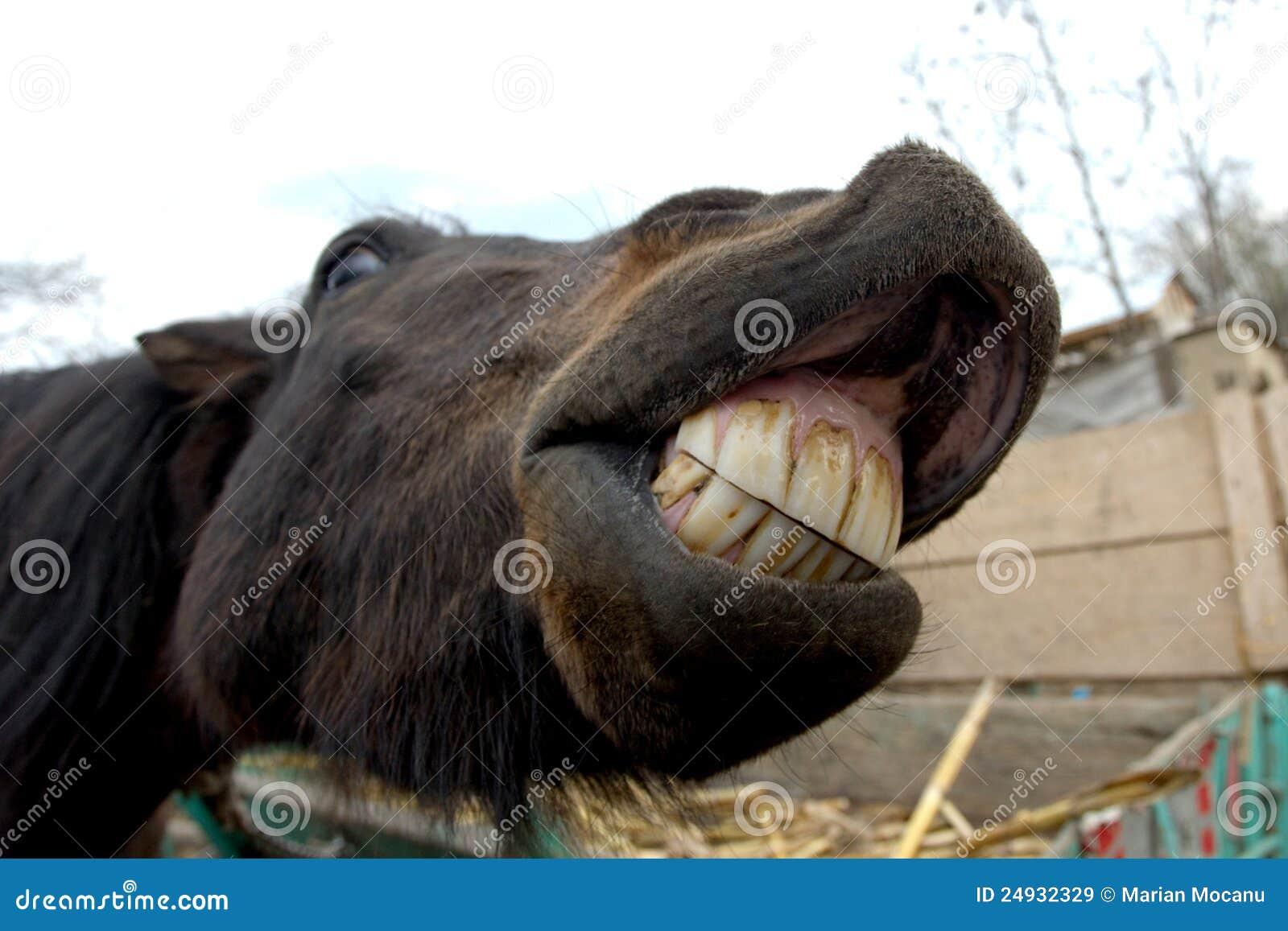 усмешка лошади