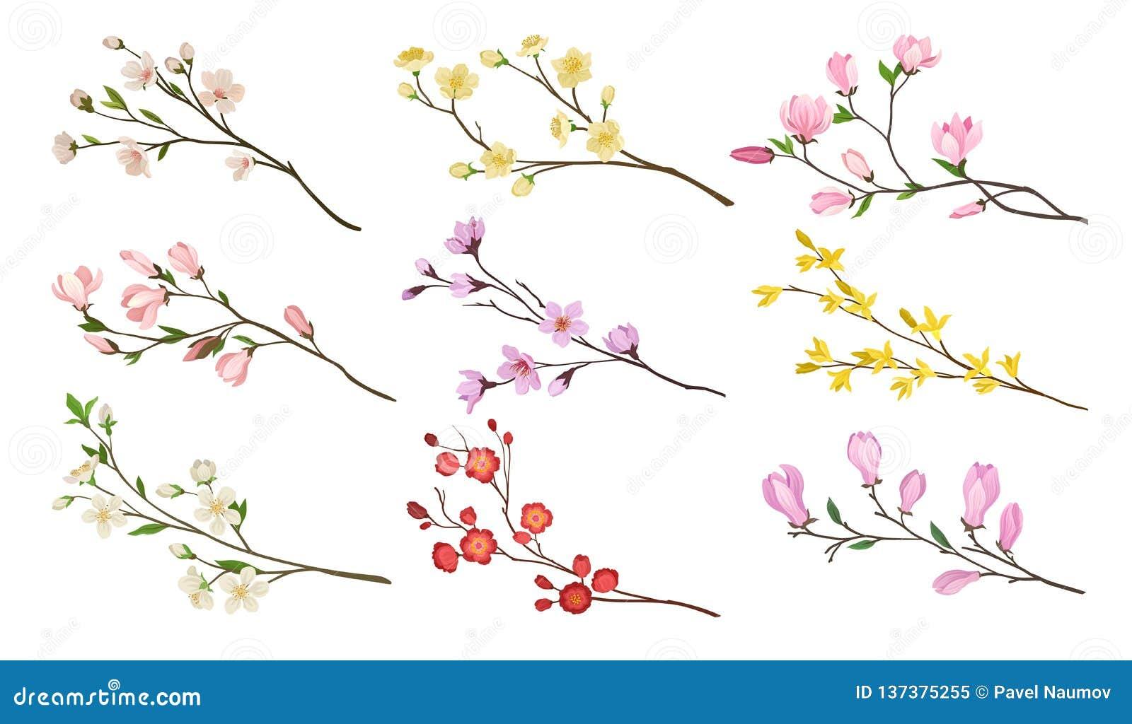Установите зацветая ветвей фруктовых деревьев Хворостины с цветками и зелеными листьями Тема природы Детальные плоские значки век