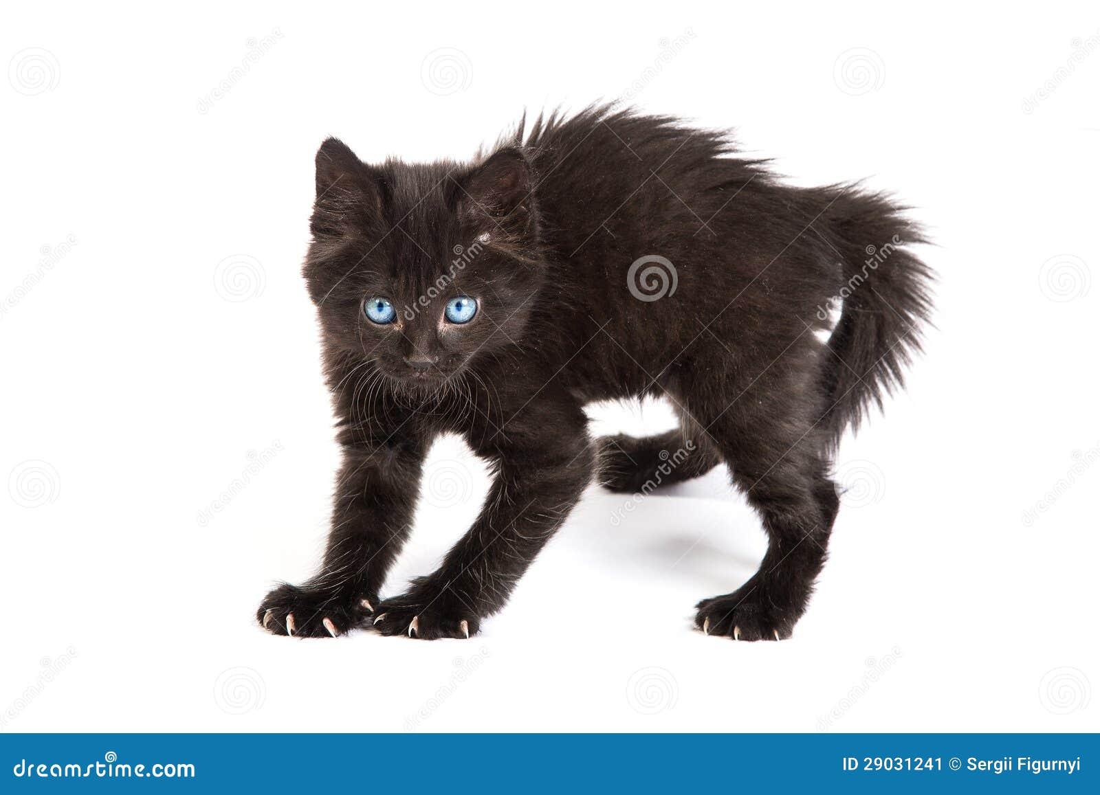Устрашенный черный котенок стоя на белой предпосылке