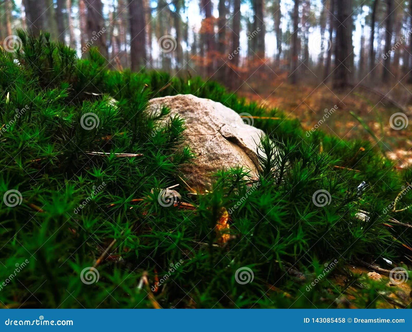Утес на мхе в лесе