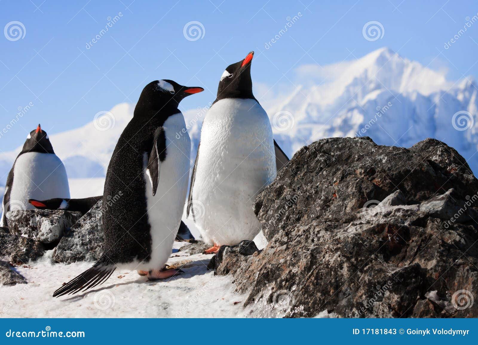 утес пингвинов