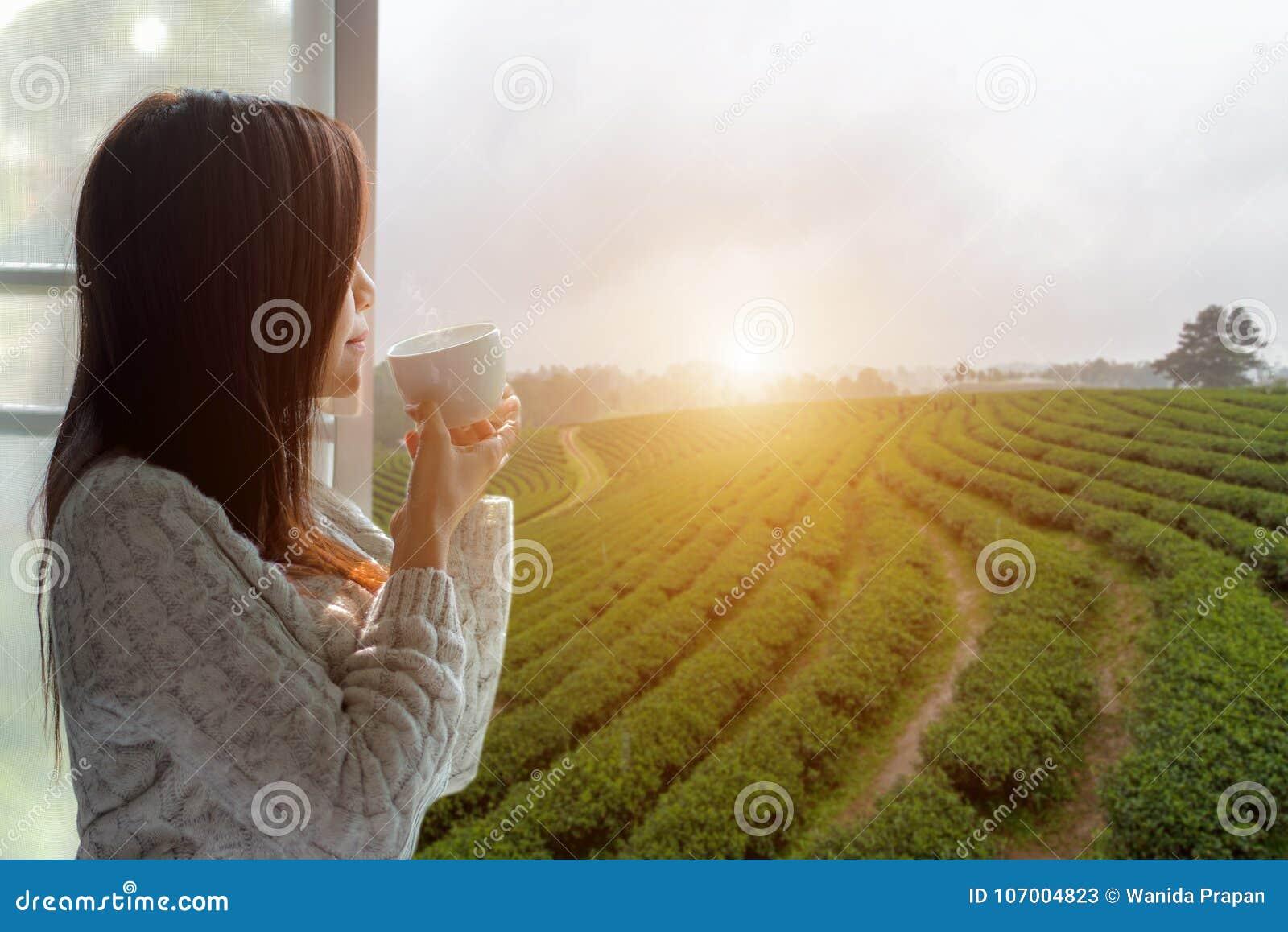 Утро азиатской женщины свежее выпивая горячий чай и смотря из окна для видит плантацию и ферму чая на солнечный день